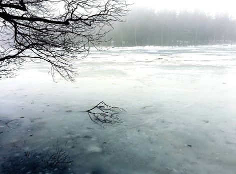 A lonely branch laying on the ice.