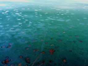 Leaves Melt Into the Ice