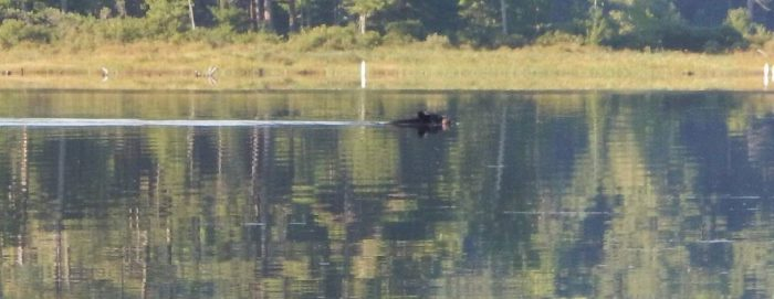 Kayaking With a Black Bear… Seriously!